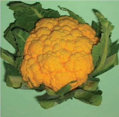 Vegetable - Cauliflower - Sunset F1 - 10 Seeds