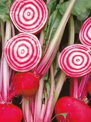 BEETROOT 'Chioggia' 50+ seeds vegetable garden NON GMO candy stripe heirloom
