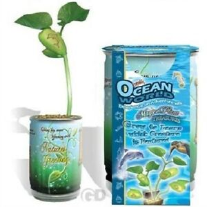 Magic Plant Ocean World Bean Seed Word Plant Nature/'s Greeting Kids Science