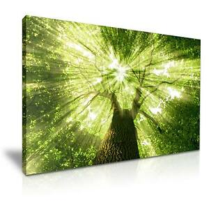 Forest-Tree-Sun-Light-Canvas-Wall-Art-Picture-Print-A1-Size-76cmx50cm