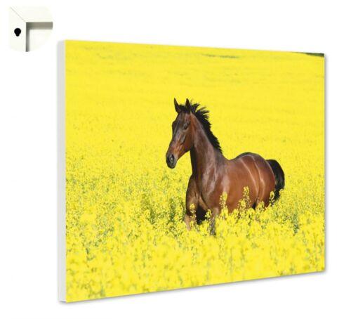 Magnettafel Pinnwand mit Motiv Tiere Pferd im Rapsfeld