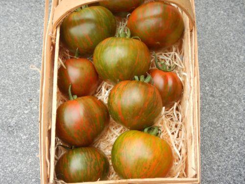 Purple Passion rot-oliv gestreifte Fleischtomate dekorative Tomate aus Kanada