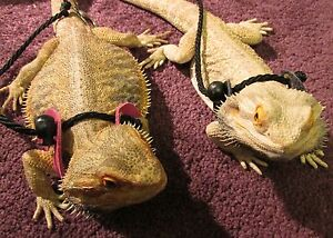 Bearded Dragon Bear Reptile Lizard Harness Lead Leather/PVC by ...