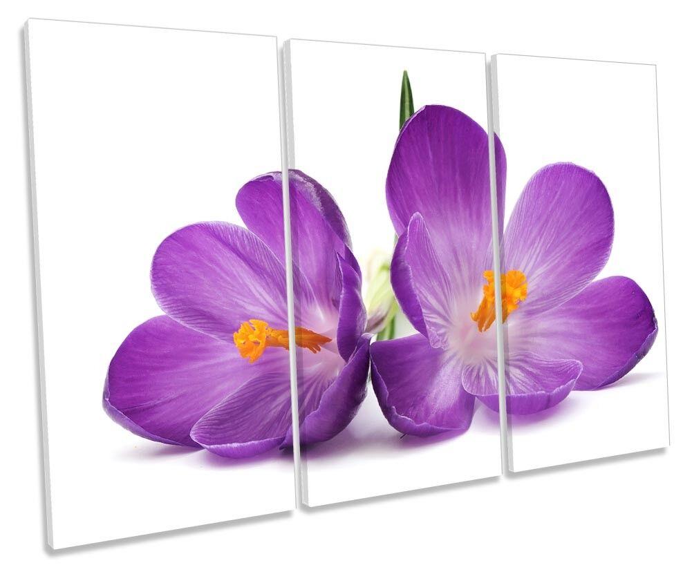 lila Crocus Flowers Floral Bild TREBLE CANVAS Wand Kunst Drucken