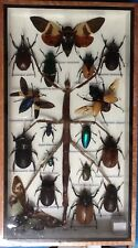 REAL EXOTIC HUGH 18 INSECT DISPLAY STICK BUG TAXIDERMY ENTOMOLOGY BEETLE INSECTS