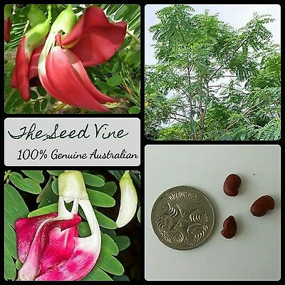 10+ RED HUMMINGBIRD TREE SEEDS (Sesbania grandiflora) Flower Tropical  Edible | eBay