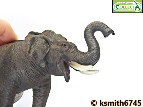 nouveau CollectA éléphant d/'Asie solide Jouet en plastique Wild Zoo Animal