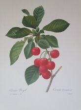 P.J. Redoute # 20 Cerisier Royale Cherries vintage print