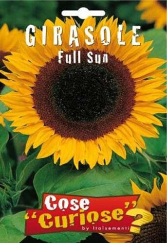 7 Semi//Seeds GIRASOLE Full Sun