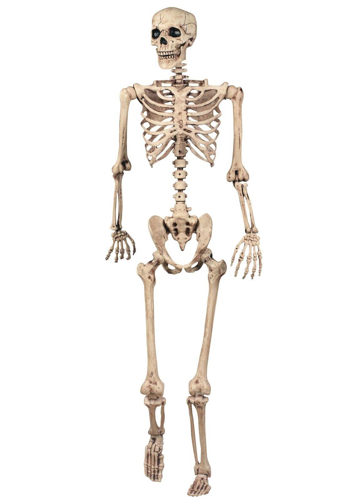 165cm Lebensgröße Beweglich Hängendes Skelett Halloween Dekoration Medizinisch