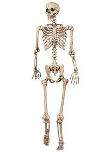 165cm-Grandezza-Naturale-poseable-Appeso-Scheletro-Halloween-decorazione-Prop-medico