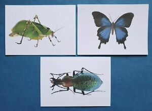 Quality-Set-of-3-Brand-New-INSECT-Postcards-Butterfly-Beetle-Grasshopper-65O
