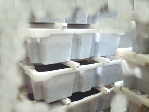 wurmerde Bio-Force nourriture! Riesenrotwürmer MIX 400 St.//250 g livraison gratuite
