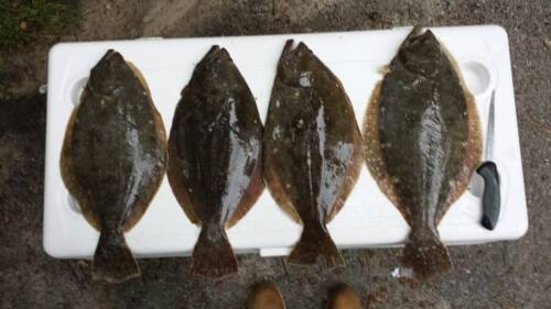 4 Flounder Salmon Cod Rigs Holographic Squid Fishing Lure Baits Hook 3//0 USA