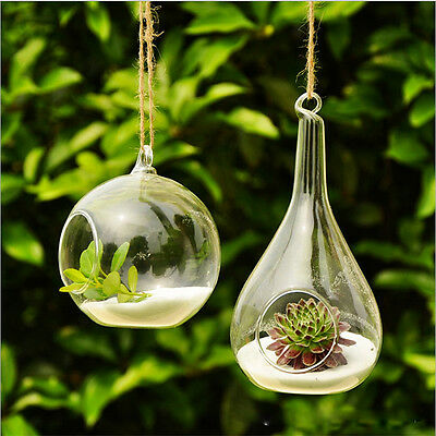 Cute Clear Glass Round with 1 Hole Flower Plant Hanging Vase Container Decor