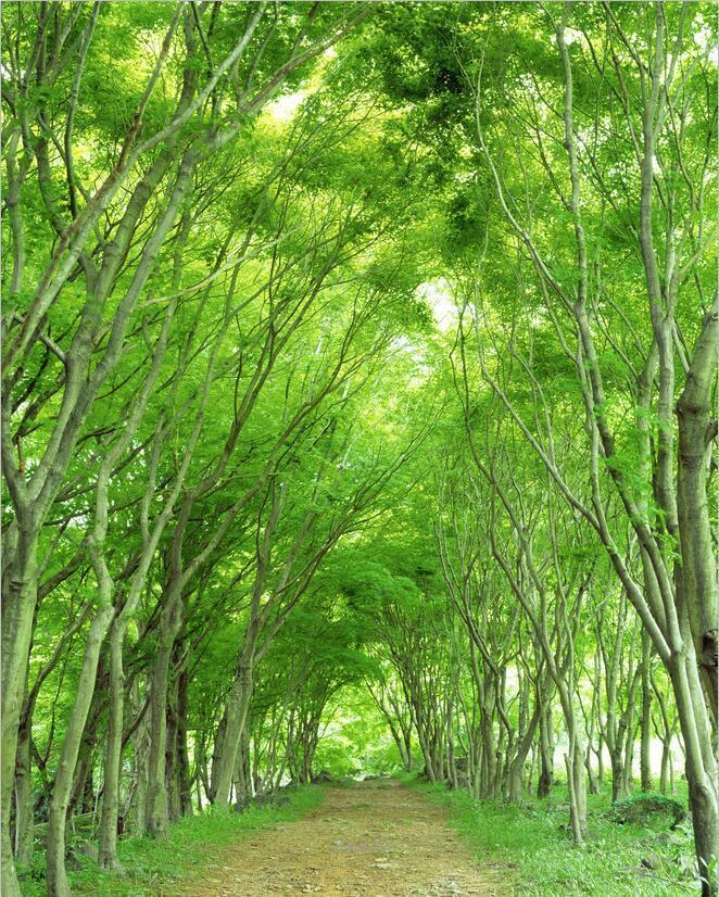 3D Dschungel Gehweg 8889 Tapete Wandgemälde Tapete Tapeten Bild Bild Bild Familie DE Kyra   Perfekte Verarbeitung    Verschiedene Waren    Ausgezeichnete Qualität  53470d