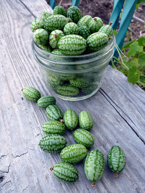 VEGETABLE  CUCAMELON   60 FINEST SEEDS