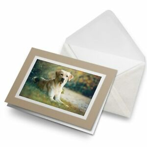 Greetings-Card-Biege-Labrador-Retriever-Dog-Pet-21777