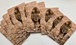 ORIGINAL-UNIQUE-RARE-Full-Deck-BIG-MALE-LION-PLAYING-CARDS-52-2-Jokers-L-K