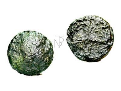 calabria-brindisi Persevering Italia Antica Semis Relieving Rheumatism