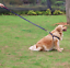 Harness-Leash-Collar-Jean-Style-Comfy-Dog-Pet-Puppy-Lead-Control-Heavy-Duty thumbnail 4