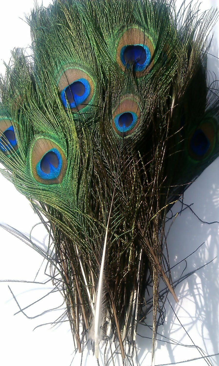 100pcs lots Real Natural Peacock Tail Eyes Feathers 8-12 Inches//about 23-30cm ZH