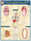 Digestive System by Staff BarCharts Inc. (2001, Book, Other)