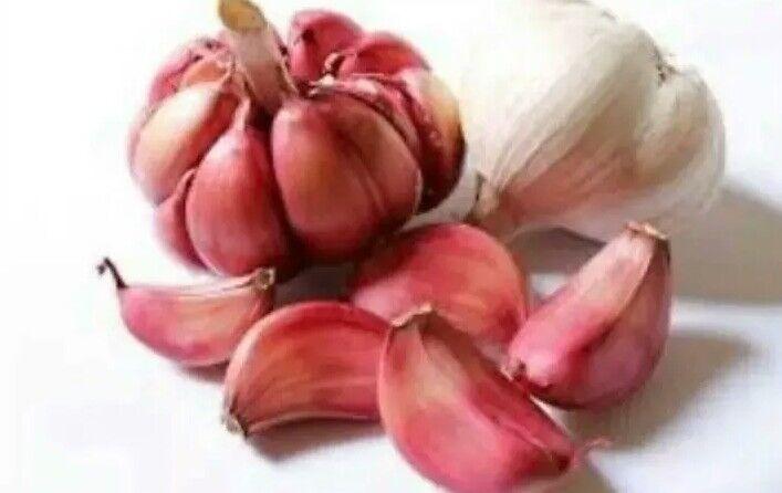 20 organic Garlic clove,Wight /seeds From 2 bulbs Hardy Bulb /Planting Now