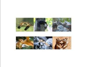 Squirrels-Kissing-Custom-Note-Cards-Pack-of-6-Blank-by-Gifted-Pet-Creations