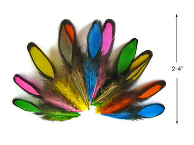 """LOT 24 SMALL BARRED PHEASANT FEATHERS CRAFTING FLY TYING HAIR EXTENSIONS 1/"""" 3/"""""""