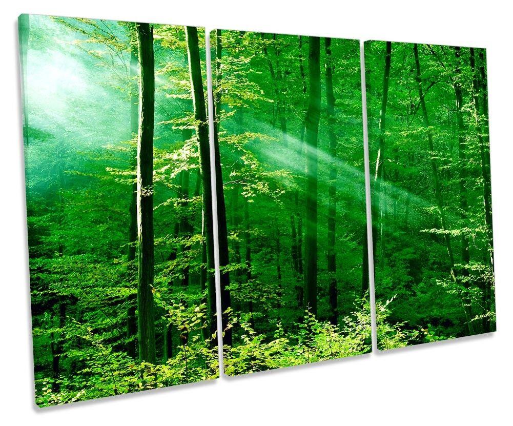 vert Forest Trees Sunlumière Picture Treble toile Wall Art Print