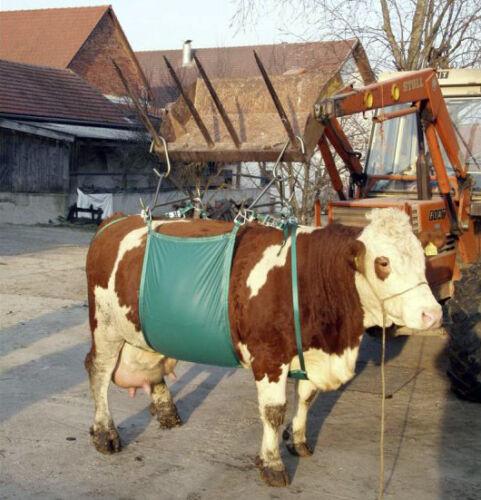 Kerbl Kuhhebevorrichtung Kühe Rinder bis ca 1000 kg Kuhheber Hebegerät