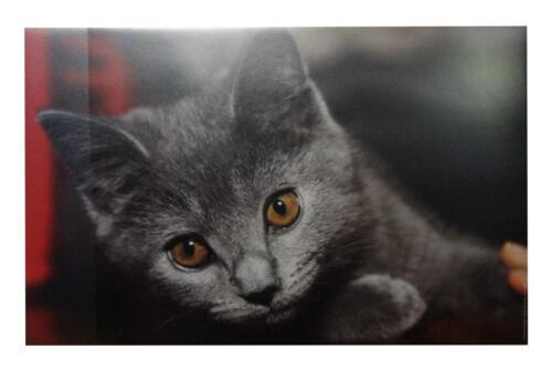 Schreibtischunterlage 58,5x38,5cm mit Katzenmotiv