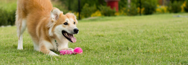 make the backyard a blast with these fun outdoor dog toys