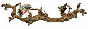 Lucky-Reptile-Ramo-di-Vite-per-rettili-Terrarium-small-sabbiato