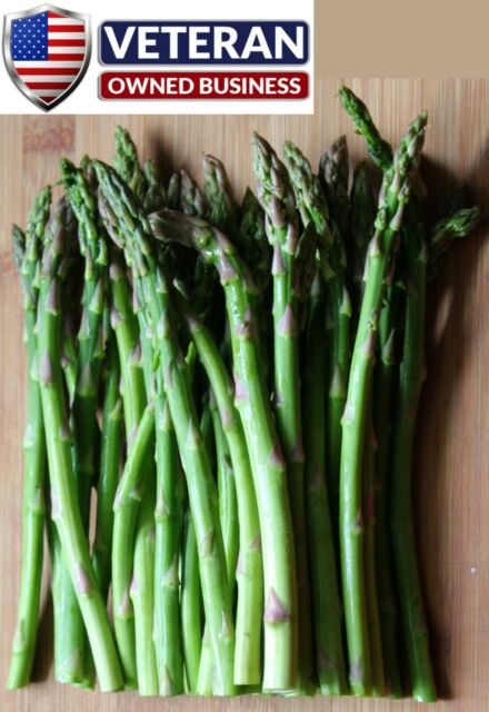 Asparagus seeds 90+ seeds Mary Washington FREE SHIPPING non GMO and heirloom