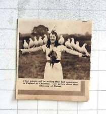 1937 Performing Pigeons Rehearsing At Barnet