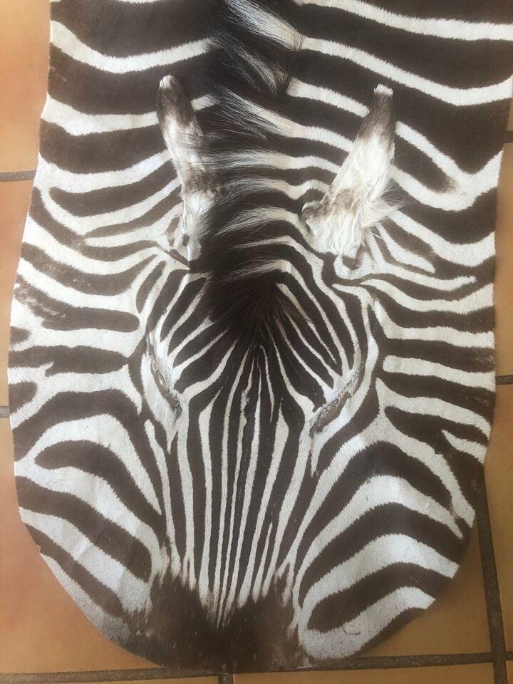 Skind, Zebraskind fra Limpopo