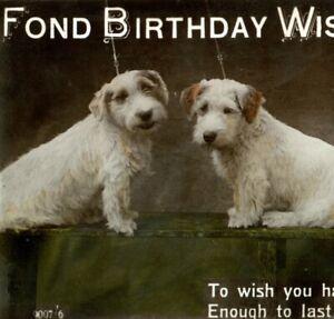 Antique Birthday card postcard RPPC dog portrait terrier photograph #58