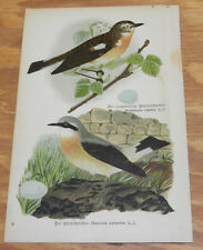 1895 Antique COLOR Bird Print/WHINCHAT & WHEATEAR