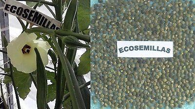 120 semillas Okra Quiabo Combo Abelmoschus esculentus seeds
