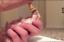 2-x-Miracle-Nipple-Mini-Original-Teats-amp-Oring-Syringes-Puppy-Kitten-Whelping thumbnail 8