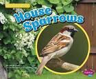 House Sparrows by Lisa J Amstutz (Paperback / softback, 2015)