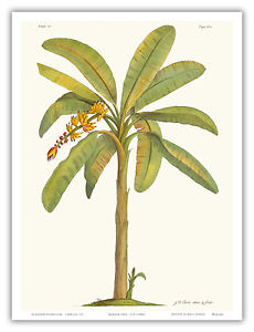 Coconut Palm Tree Hawaii Aloha Botanical Floral Vintage Art Poster Print