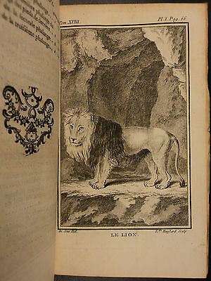 1764 Buffon Veterinary Natural History BIG CATS LIONS Tigers Leopards Panthers
