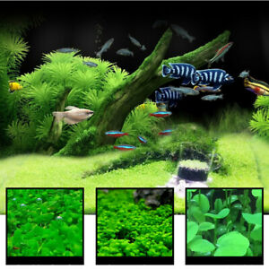 Am-HK-Aquarium-Plant-Seeds-Water-Plant-Grass-Seeds-Fish-Tank-Landscape-Decor-S