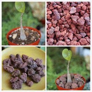 9oz Lava Rock Red Aquarium Rock Soil Cover Planter Stone Bonsai Cactus Succulent Ebay