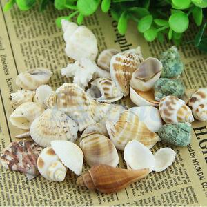 Approx 100g Beach Mixed SeaShells Mix Sea Shells Shell Craft SeaShells Aquarium