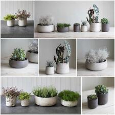 Concrete Planter Pot House Plant - Garden Trading - Stone Succulent Cactus Cacti