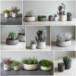 Image Is Loading Garden Trading Concrete Planter Plant Pot Bowl Xmas